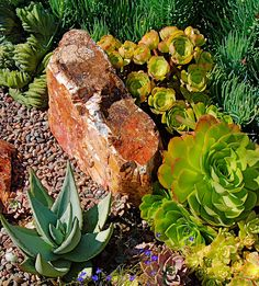 867 Best Rock Garden Ideas Images In 2019 Rockery Garden