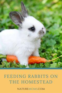 Feeding Rabbits on the Homestead #rabbits #care