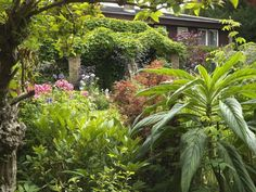 One garden designer creates a plant-lover's paradise Plant Design, Garden Design, Olympic Garden, Virginia Creeper, Pond Liner, Agapanthus, Healthy Environment, Shades Of Gold, Different Flowers