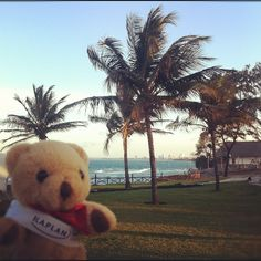 The #KaplanBear is with Sam, our Admissions Adviser in #Tanzania! Here he is posing by #TheOysterBay, in #DaresSalaam. There's still time to apply for #September! by KIC Pathways - University Preparation Courses, via Flickr