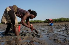The women of Anacamona village eke out a physically challenging and hazardous living on the oyster beds of the Bijagós archipelago Oyster Bed, African States, Local Hotels, St Helena, West Africa, The Republic, Archipelago, Sierra Leone, Ghana
