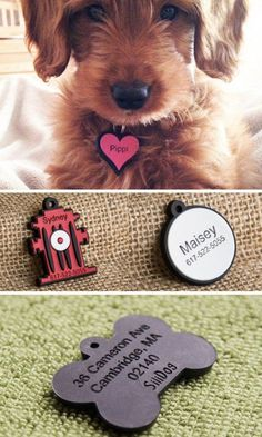 No more noise from jingling metal or plastic dog tags. These silicone dog tags are flexible, durable, fade-proof, and silent. Inspired by his scratch-happy rescue dog, Founder Michael Lickstein created a noiseless tag that you can have custom engraved.