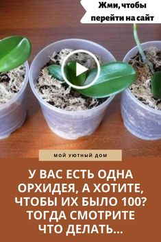 Growing Lemon Trees, Growing Orchids, Orchid Care, Small Farm, Horticulture, Animals Beautiful, House Plants, Diy And Crafts, Flowers