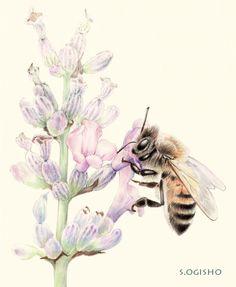 蜜蜂 Pictures Of Insects, Pictures To Draw, Colored Pencils, Bees, Tattoo, Animals, Honey Bees, Animales, Colouring Pencils