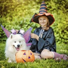 Goblins and Broomsticks: Halloween Pet Safety Do's and Don't's