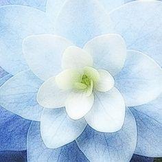Little Blue Belle by breathofanangel on Etsy, $15.00