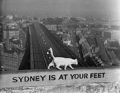 Back in 1957 a cat named George lived on top of Sydney Harbour Bridge. | Cats Used To Have The Best View In Sydney