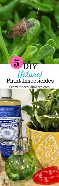 5 DIY Natural Plant Insecticides < From Under a Palm Tree Organic Gardening, Gardening Tips, Natural Insecticide, Parenting Win, Peppermint Soap, Funny Mom Quotes, Easy Jobs, Healthy Lifestyle Tips, Child Life