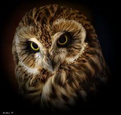 Owl by Lilia73.deviantart.com