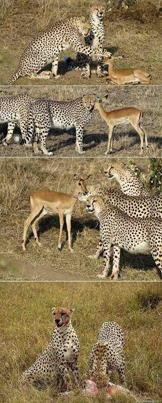 Excelentes momentos de amistades animales. En el dia de hoy les presento esta coleccion de fotos, de amistades animales, en las cuales podran ver como algunos animales se llevan muy bien......