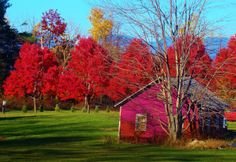 "red trees | Red Trees and Pink Barn"" B Upton"