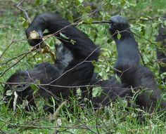Burgers Zoo  gezien door mijn lens. (fotofilmpje)