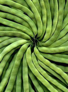 Grüne Bohnen - Gartenbohne - Grüne Bohnen – Gartenbohne Imágenes efectivas que le proporcionamos sobre diy Una imagen de alta - Go Green, Green Colors, Fresh Green, Still Life Photography, Food Photography, Colour Photography, Fresh Vegetables, Veggies, Fruit And Veg