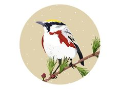 Winter Birdy by Patricia Martinez Red Design, Graphic Design, Rooster, Bird, Winter, Animals, Animais, Animales, Animaux