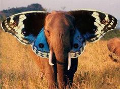 the real Dumbo