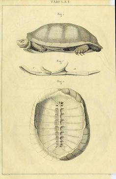 Turtle https://sellercentral.amazon.com/gp/orders-v2/list?ie=UTF8&*Version*=1&*entries*=0&