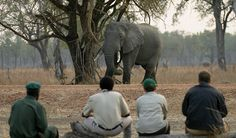 Wouldn't you #love this to be a part of your next #holiday to #Africa ? #wildlife #safari #elephant