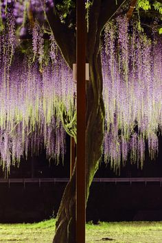 ponderation:  Wisteria trellis by HiroshiOka