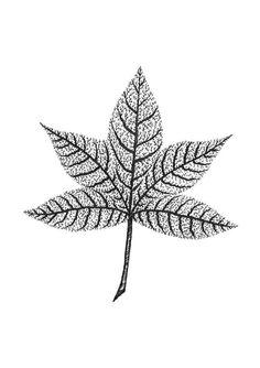 Veined Leaf Art Print Pen & Ink Art Leave Print by MenisArt