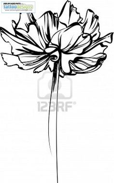 Higher Resolution Sketch Of Flower With Large Petals