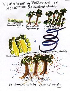 A Pattern Language of Sustainability: Ecological design and Permaculture - illustrated dissertation incl. discussion of fractals and other phenomena contributing to natural balance