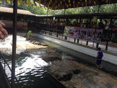 Crocodile Farm in Bangkok