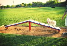 5 of Americas Best Dog Parks   Designed for Dogs: 5 Fantastic Dog Parks Across the U.S. »    It doesn't take a lot to make dogs happy — a full belly, a warm bed, lots of love and plenty of room for play are all they need. For those living in crowded cities, dog parks have become the solution to that third requirement.
