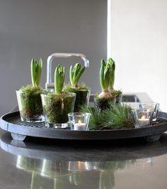 Hyacinter på köksbänken
