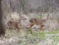 images of deer | Leave a Reply Cancel reply