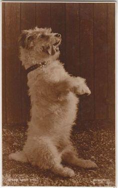 Original vintage real photo postcard of a Jack Russell Terrier dog, Judges Ltd Photos With Dog, Parson Russell Terrier, Pet Urns, Vintage Dog, Terrier Dogs, Old Pictures, Mans Best Friend, Pet Portraits, Vintage Cards