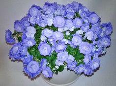 Piękne kwiatki