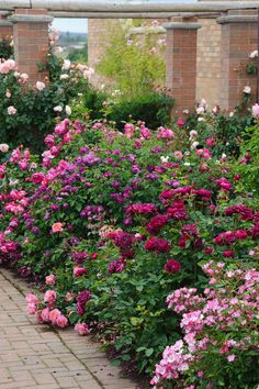 pretty cottage garden border ideas 3 There are also some things to consider with the garden paths. If you want to create a typical Cottage garden, you should make sure that the paths do not become too Garden Shrubs, Herb Garden, Garden Paths, Garden Landscaping, Garden Bar, Garden Boxes, Easy Garden, Garden Bridge, Landscaping Ideas