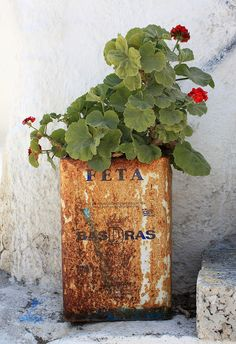 Greece - Geranium in a vintage tin.Greece - Geranium in a vintage tin. Recycling, Red Geraniums, Greek Isles, Parthenon, Greece Travel, Container Gardening, Succulent Containers, Container Flowers, Container Plants