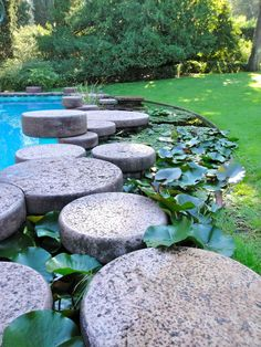 Garden with swimming pool and greenhouse - Villa La Terrazza photo n.5
