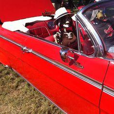 Impala. Día de Los Muertos event Oceanside, Ca. 10/27/13.