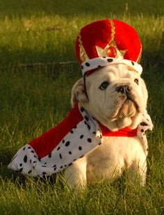 UGA needs an outfit like this so he can look down from on high at his subjects!
