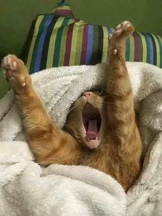 I'm awake! #Cats
