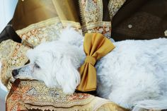 Wedding Dog Collar - After a long wedding day   LADogStore.com