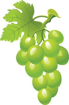 This high quality free PNG image without any background is about grape, berry, grapes, fruit, green grapes and food. Painted Wine Bottles, Painted Wine Glasses, Grape Tree, Grape Vines, Bottle Painting, Bottle Art, Grape Drawing, Grapevine Leaf, Sunflower Template