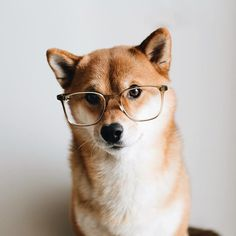 I don't always wear glasses, but when I do, I look awesome!