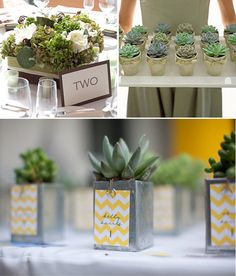 Has anyone used succulents instead of flowers? Succulent Favors, Succulent Centerpieces, Succulent Ideas, Centerpiece Ideas, Wedding Centerpieces, Wedding Table, Table Decorations, Wedding Flower Inspiration, Wedding Flowers