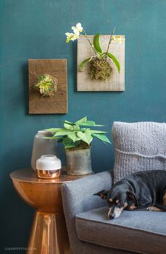 DIY mounted orchids and succulents
