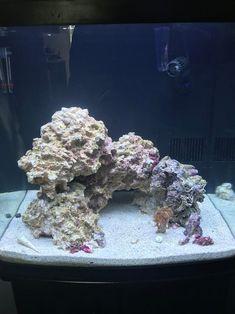 New nano tank. Opinions on my aquascape - Aquascaping Forum - Nano-Reef Community Saltwater Fish Tanks, Saltwater Aquarium, Freshwater Aquarium, Aquarium Fish, Nano Reef Tank, Reef Tanks, Colorful Fish, Tropical Fish, Coral Reef Aquarium