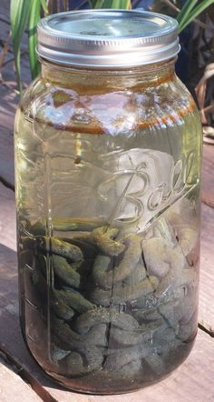 Make your own Iron mordant solution to change the color of naturally dyed fibers and fabrics.