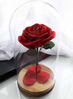 ~ Roses ~ Aesthetic Roses, White Aesthetic, My Flower, Flower Power, Flowers, Cheryl Blossom Riverdale, Memes Arte, Cherry Wine, The Little Prince