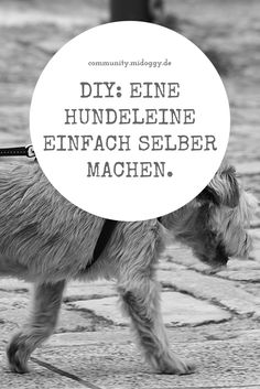 Hundebody D.I.Y | Dog