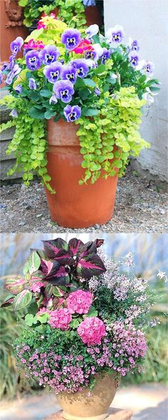 Colorful flower gardening in pots made easy with 38 best designer plant list for each container and sun vs shade locations. Grow a beautiful flower garden with these proven combinations and success tips! - A Piece of Rainbow #flowergarden