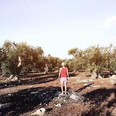 Often I'm come back to my land in #Salento  Apulia - Italy // The olive trees are the symbol of this place and this year its have suffered so much and me with its    #WHPmyoasis