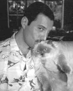 36 Best Freddie And His Cats Images Queen Freddie Mercury Queens