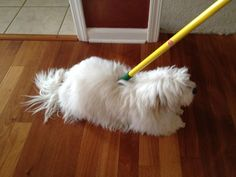 """""""Heidi Mop"""" by Coton de Tulear - Dust bunnies are no match for this super absorbant Heidi Mop! Dirt and dust are guaranteed to cling to its entire surface."""